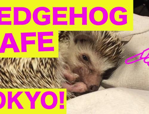 Tokyo Hedgehog Cafe?!!!